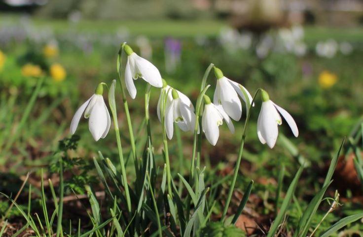 West-Dean-Gardens-_160218