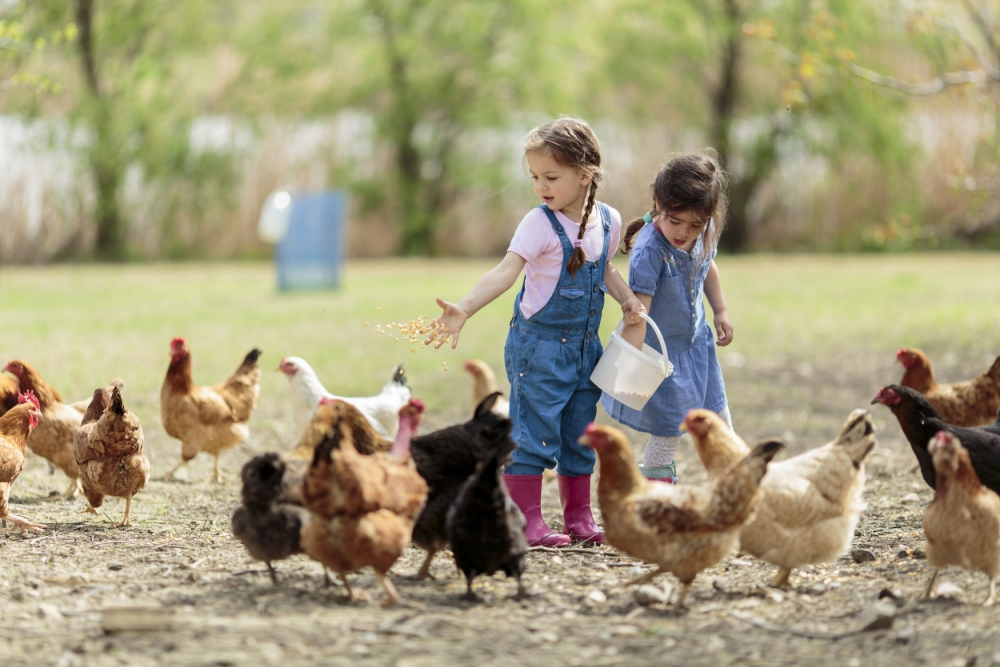 Kids-with-chickens-_080518