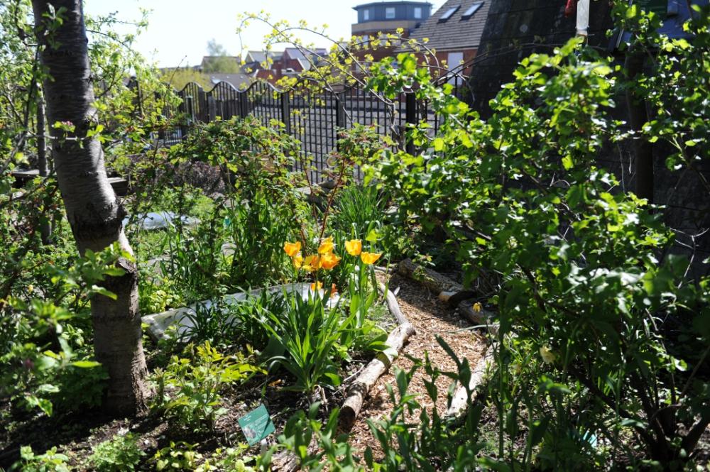 RISC-Roof-Garden-_080518