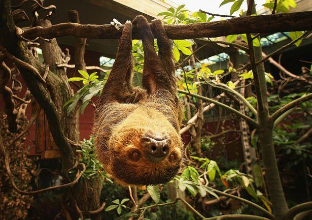 rainforest-peter-_250518
