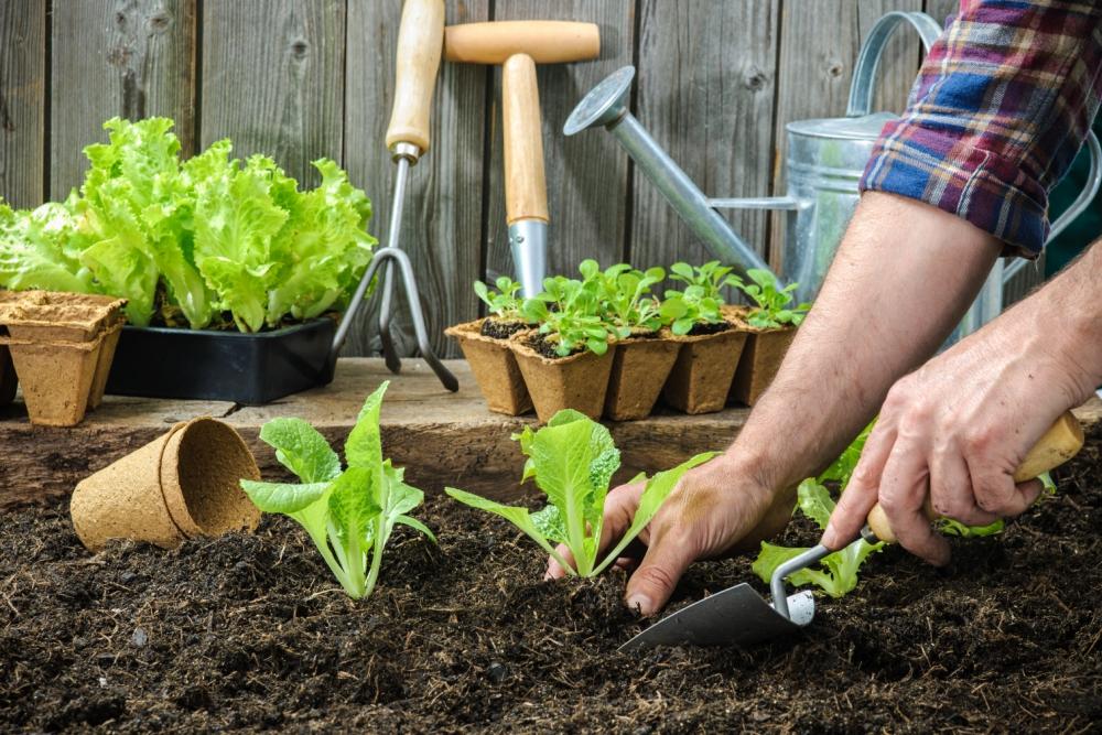 Farmer-planting-_130618