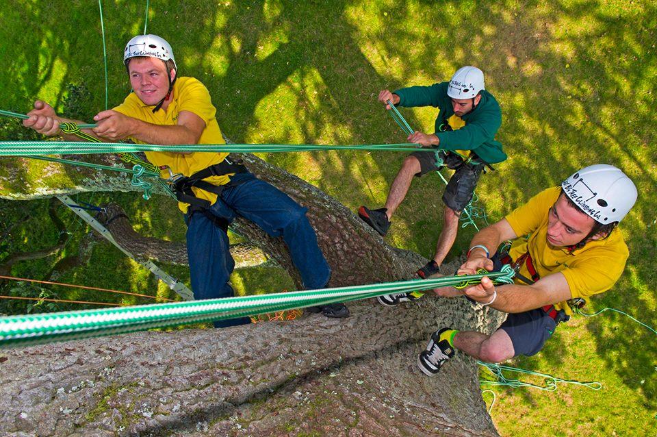 big-tree-climbing-OH210618