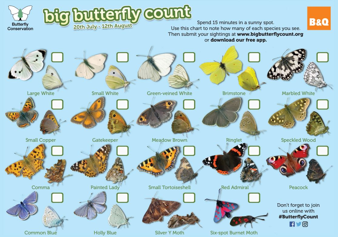 Big-Butterfly-Count-chart_230718