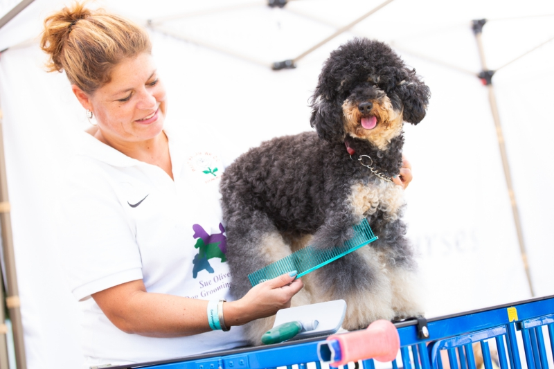 Dog-Festival-230818-_3-1