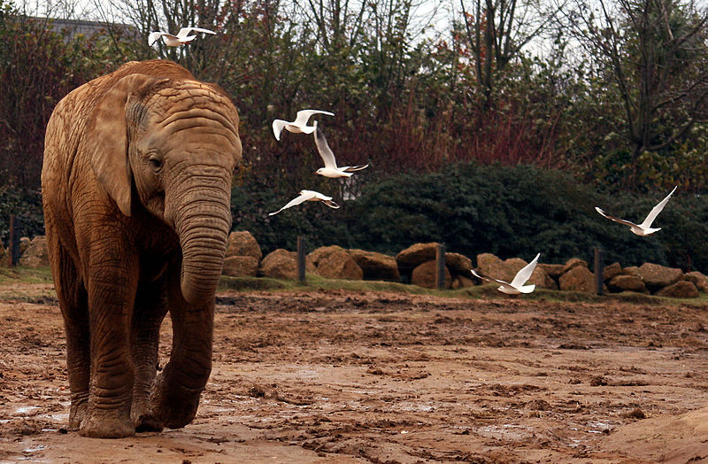 Days-out-in-Essex-for-children-with-special-needs-or-disabilities-Colchester-Zoo