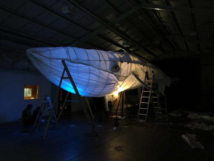 Big-Blue-whale-131118-2