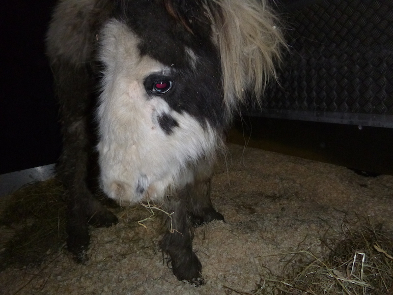 RSPCA-appeal-for-information-after-abandoned-colt-dies-in-Hampshire3