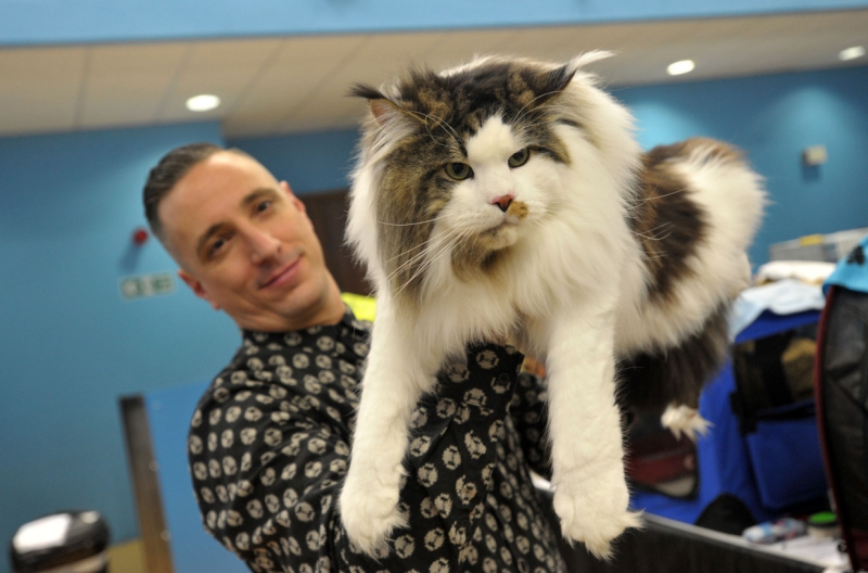 Check-out-this-international-cat-show-heading-to-Surrey2