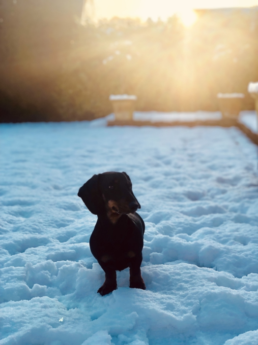 Puppy-in-snow-050219