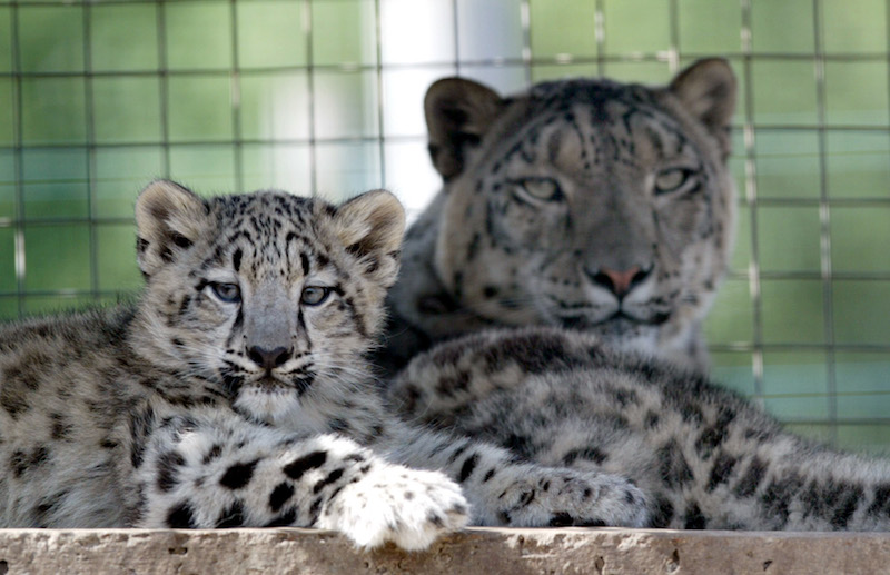 opinion-piece--shockig-animal-visit-2