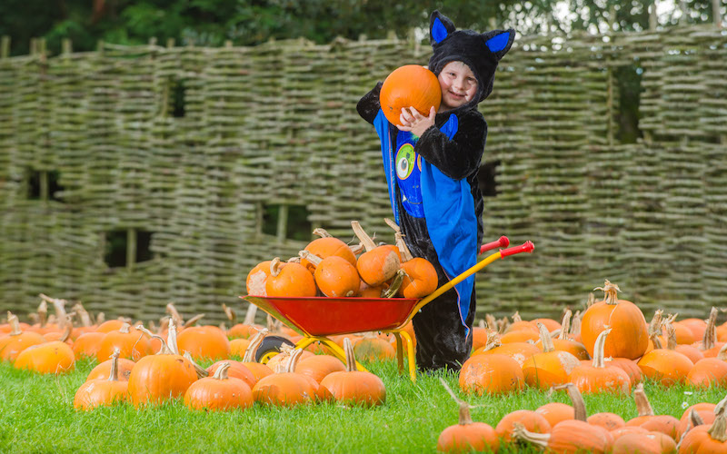 -Go-pumpkin-picking-this-half-term-with-our-list-of-the-best-patches-across-the-UK12
