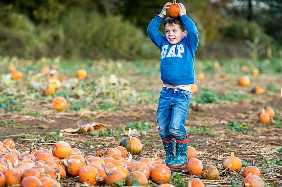 Go-pumpkin-picking-this-half-term-with-our-list-of-the-best-patches-across-the-UK