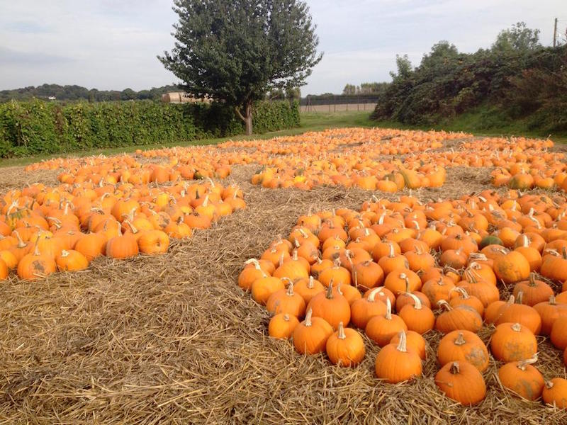 Go-pumpkin-picking-this-half-term-with-our-list-of-the-best-patches-across-the-UK10