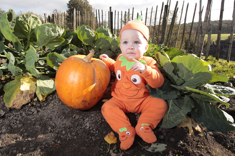 Go-pumpkin-picking-this-half-term-with-our-list-of-the-best-patches-across-the-UK14