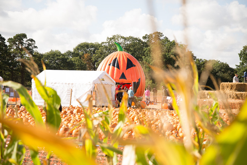 Go-pumpkin-picking-this-half-term-with-our-list-of-the-best-patches-across-the-UK15