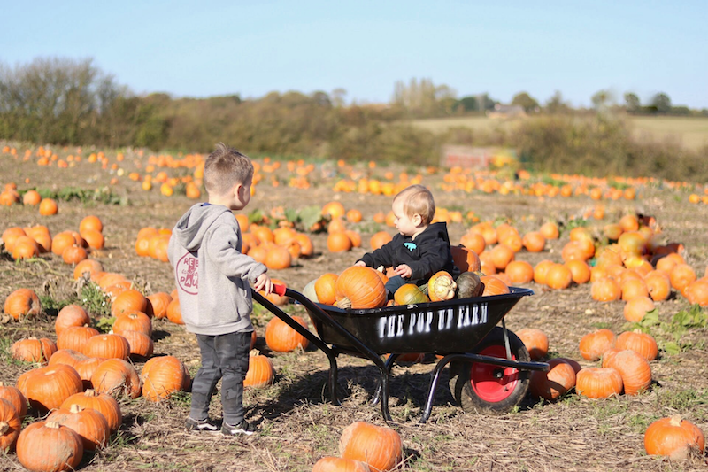 Go-pumpkin-picking-this-half-term-with-our-list-of-the-best-patches-across-the-UK16