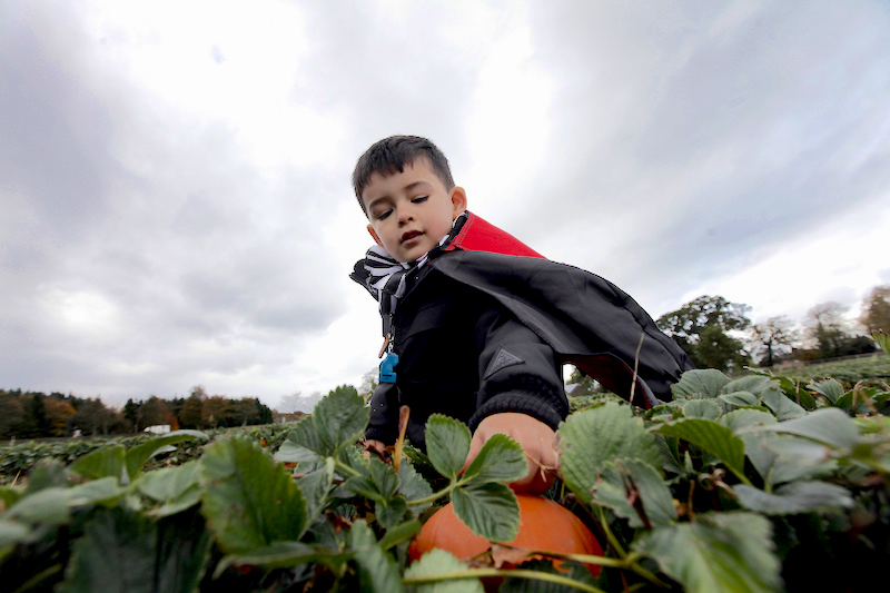 Go-pumpkin-picking-this-half-term-with-our-list-of-the-best-patches-across-the-UK17