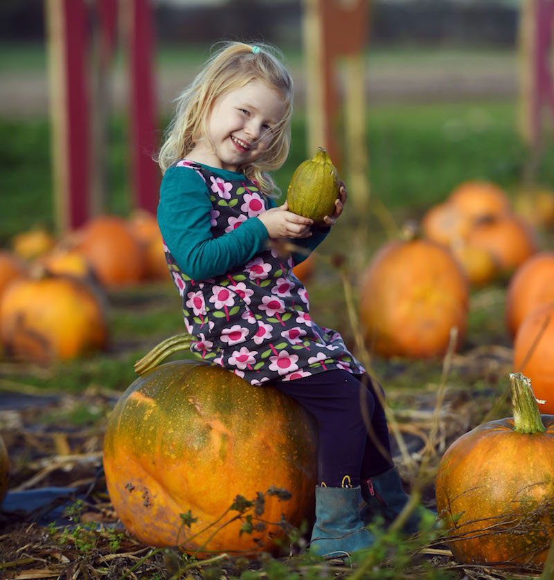 Go-pumpkin-picking-this-half-term-with-our-list-of-the-best-patches-across-the-UK18