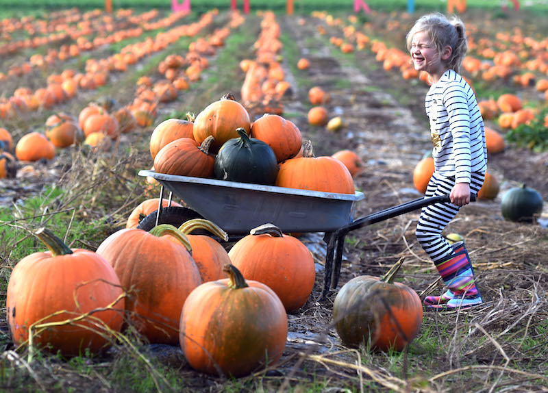 Go-pumpkin-picking-this-half-term-with-our-list-of-the-best-patches-across-the-UK2