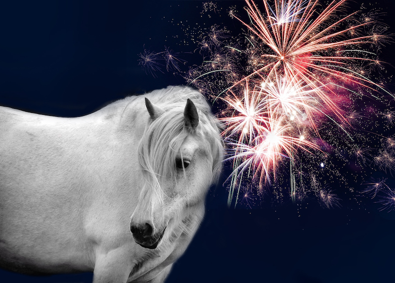 Top-tips-to-keep-pets-calm-during-firework-season-1