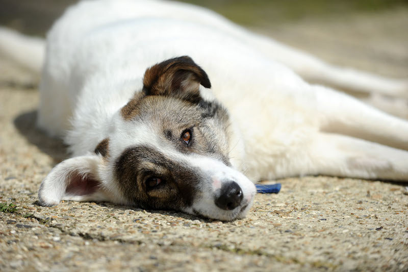 Help-a-four-legged-friend-find-a-home-with-Dogs-Walk-This-Way-Rescue-team2