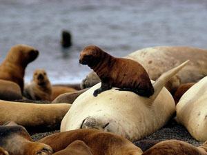 elephant-seal-pup_6611_600x450