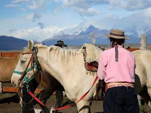 la-patagonia-horses_6613_600x450