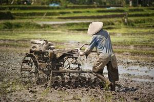 2rice-farmer-bali_31618_600x450