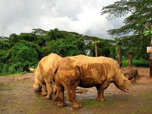 3white-rhinos_31637_600x450