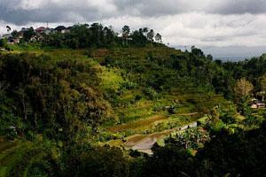 rice-terraces-bali_31640_600x450