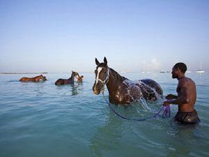 09-barbados-horse-swim_27262_600x450