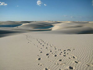 dune-field_6641_600x450