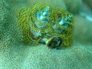 christmas-tree-worm_12087_600x450