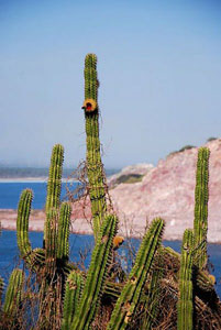 Mexic_cactus_29589_600x450