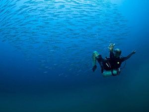 diving-eastern-seaboard_10822_600x450