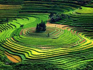 1terraced-fields-vietnam_11388_600x450