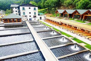 Hotel Lostrita Pastravarie Hotel & Spa Maramures