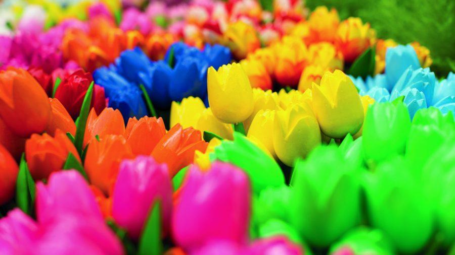 Ams Flower Market 0716 02