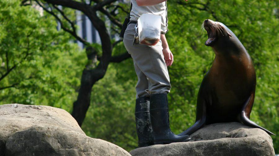 Ewr Central Park Zoo 184112849 Rfis 0217