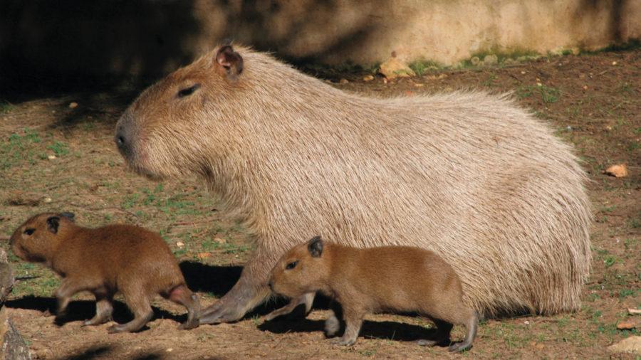 FAO_Zoo_Lagos_0117_07_RGB-136-DPI-For-Web