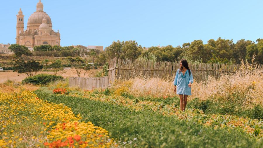 Gozo fields