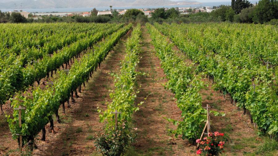 KGS_Triantafyllopoulos_Winery_0117_02_RGB-136-DPI-For-Web