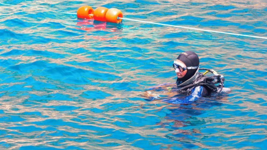 MLA_Cove_Diving_0117_03_RGB-136-DPI-For-Web