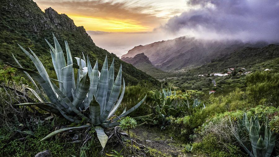 Tfs Aloe Park 987443296 Rfis 1218