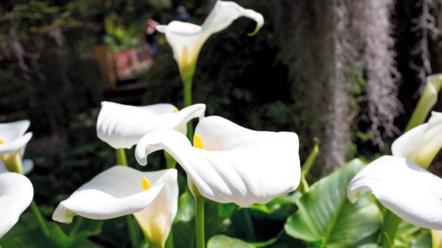 TFS Botanical Gardens 0117 04 RGB 136 DPI For Web