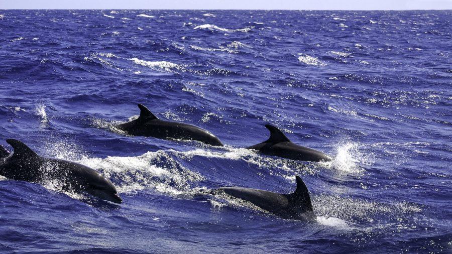 Tfs Dolphins 172238957 Rfis 1218