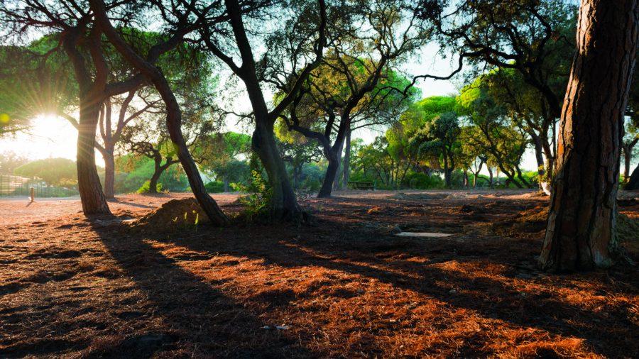 Fao Faro Ria Formosa National Park 14 0217 196