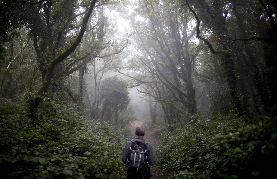 Bosque de la Niebla