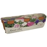 G Plants Terracotta Trio Sweet Pea Kit (042061)