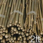 Jvl Bamboo Canes 61cm 20s (05-002)